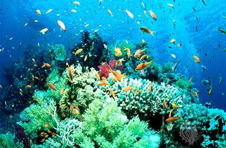 Reefjpeg
